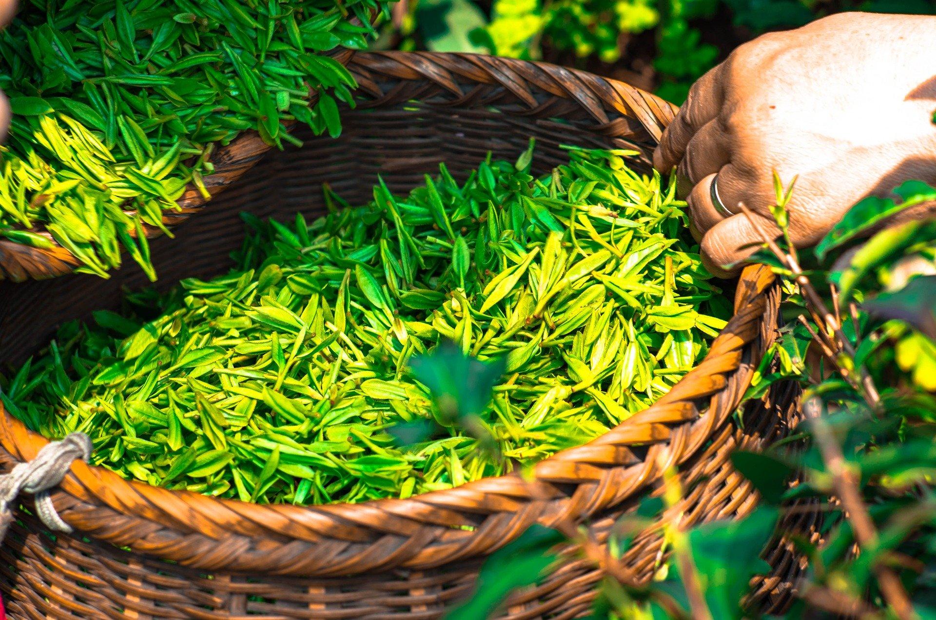 tea-1309015_1920.jpg