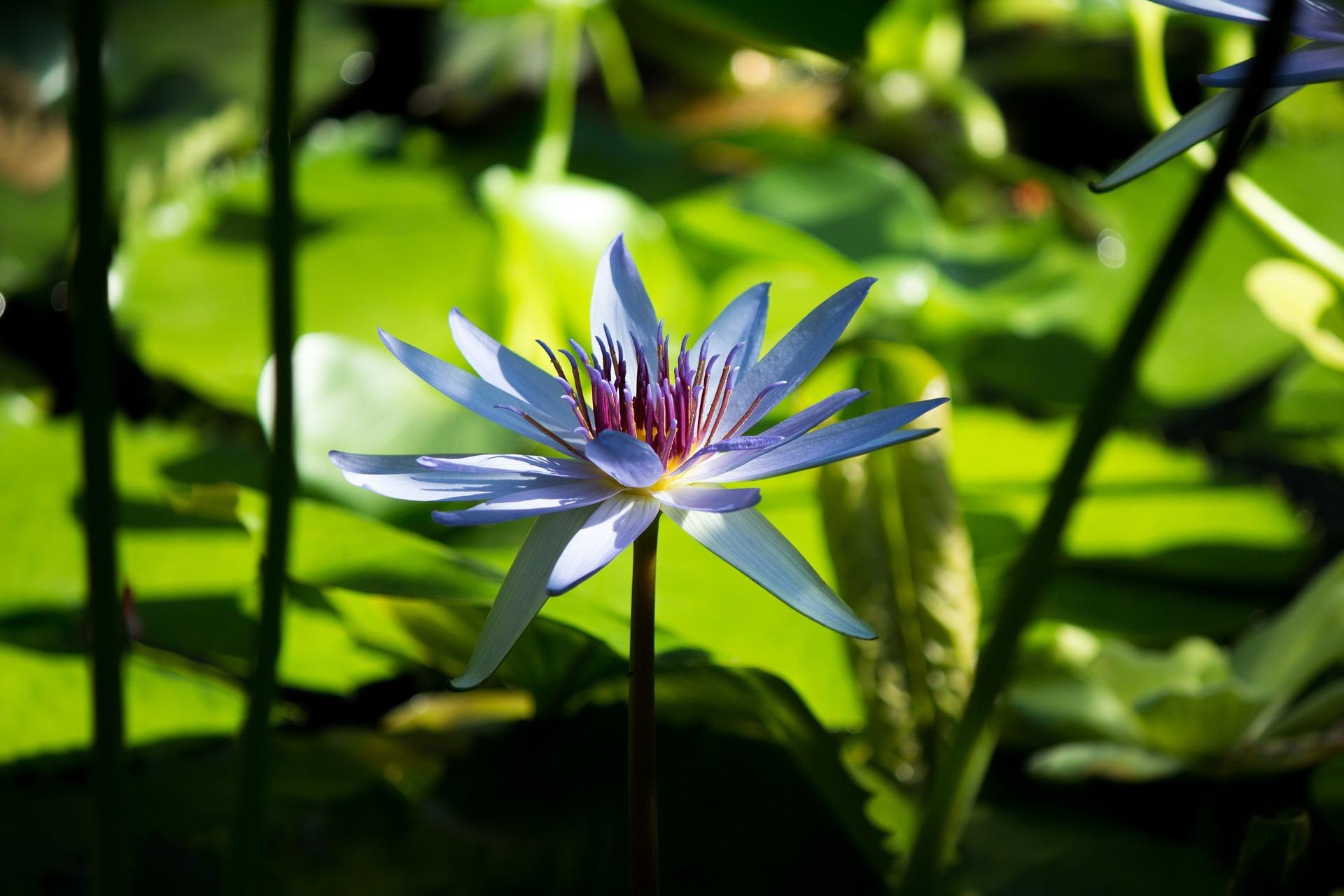flower-1286081_1920.jpg