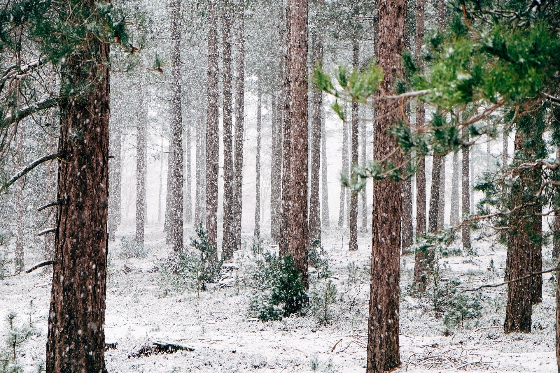 woods-690257_1920.jpg
